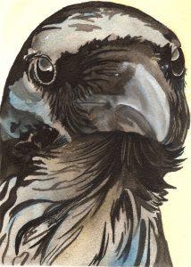 Crow Gazing-1